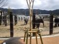 150308ラオスからやって来た子ゾウ達