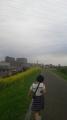 150404淀川堤防を歩く