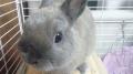 150505少しウサギと遊ぶ