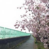 中川の川沿い