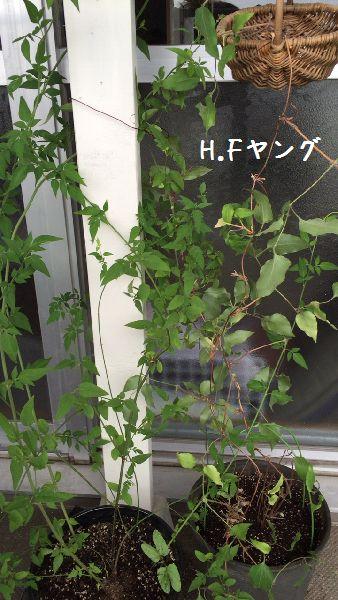 IMG_2505-1.jpg