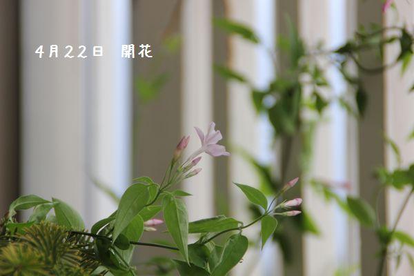 IMG_7645-1.jpg