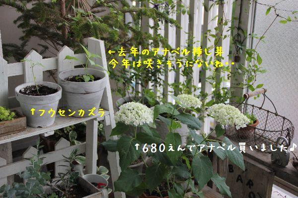 IMG_8670-1.jpg