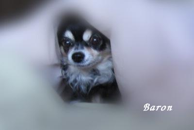Baron's diary