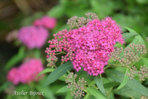 019-長谷寺の花