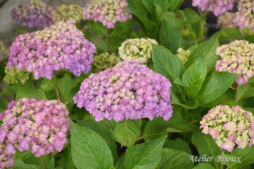 067-長谷寺の花