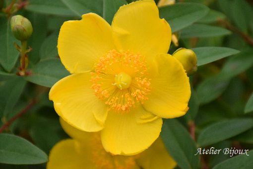 078-長谷寺の花