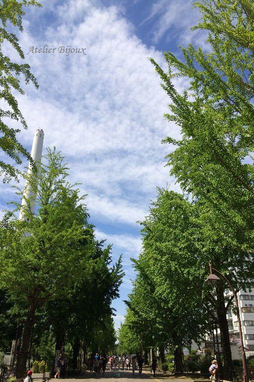 022-イチョウ並木