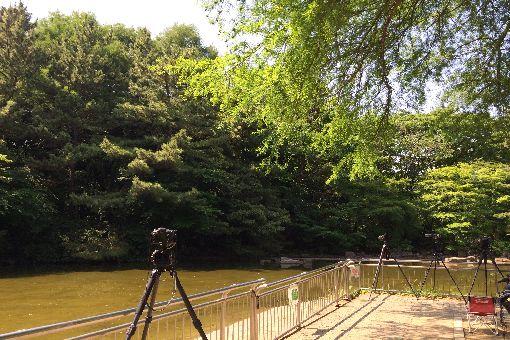 018-光が丘公園池-カメラ