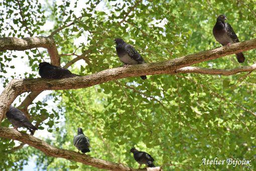 024-光が丘公園-鳩