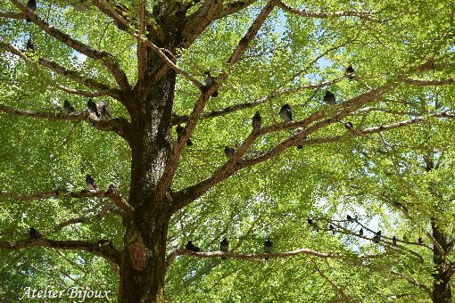 028-光が丘公園-鳩