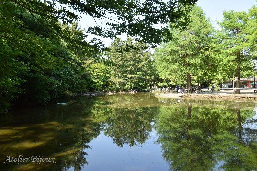 002-光が丘公園池
