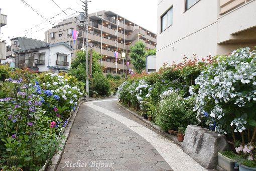 003-紫陽花