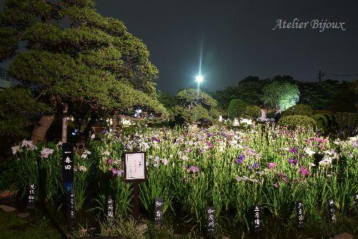116-堀切菖蒲園
