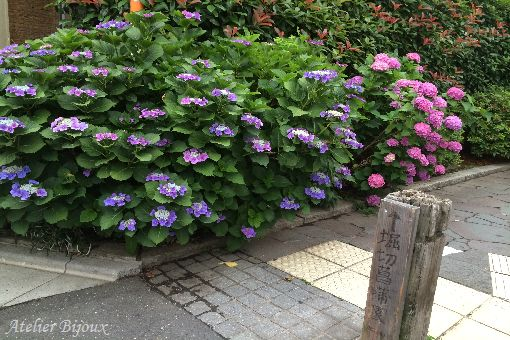 008-紫陽花