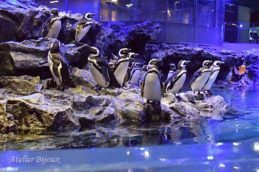124-ペンギン