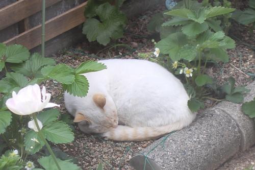 cat-20150506-oniwa01.jpg