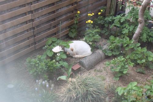 cat-20150506-oniwa02.jpg