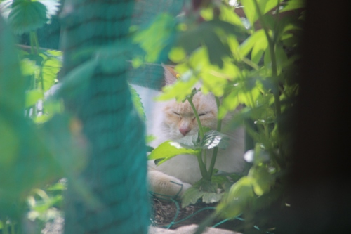 cat-20150507-oniwa02.jpg