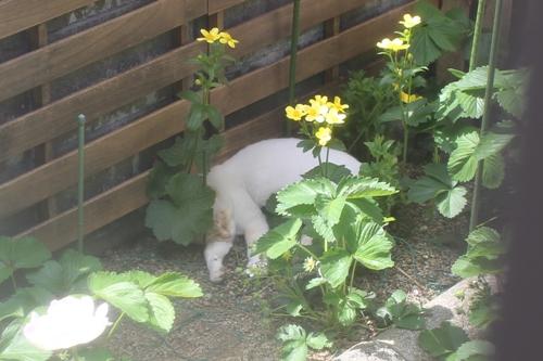 cat-20150507-oniwa03.jpg