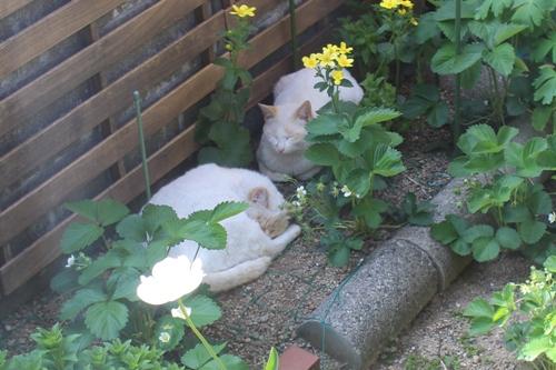 cat-20150507-oniwa04.jpg