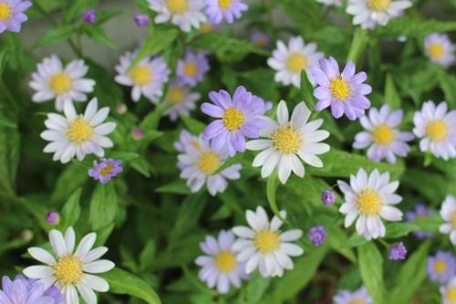 flower-20150510.jpg