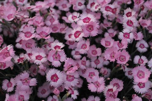 flower-20150520.jpg