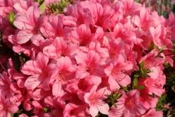 flower-20150526-01.jpg