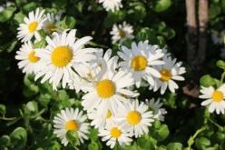 flower-20150526-02.jpg