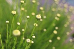 flower-20150528-01.jpg