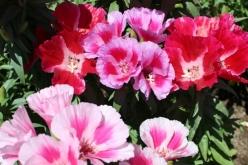flower-20150607-02.jpg