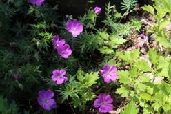 flower-20150607-04.jpg