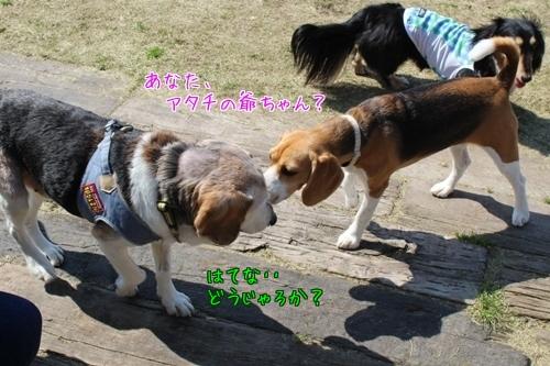 friends-20150423-run01.jpg