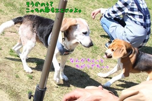friends-20150423-run02.jpg