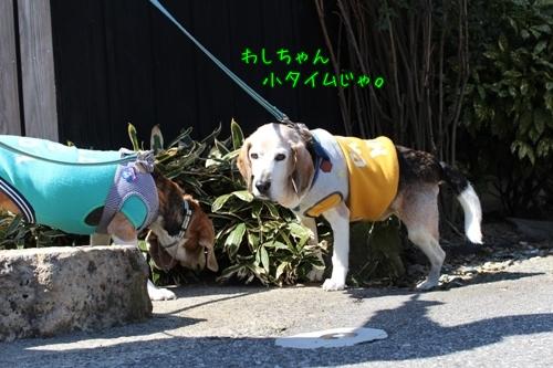 fritake-20150327-sanpo10.jpg