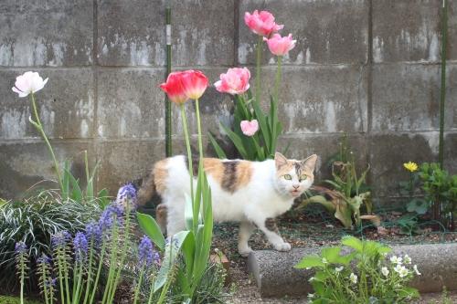 may-20150506-20130518-oniwa02.jpg