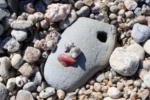 stonechell-20150221.jpg