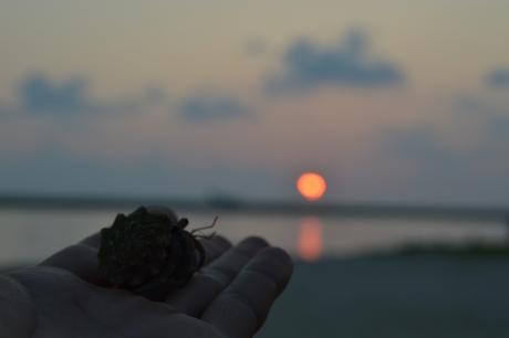 12ヤドカリと夕陽