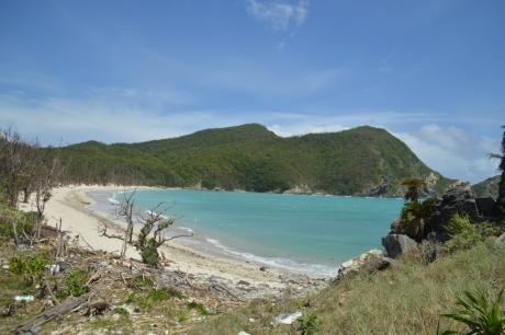 6枯れ木が立ち並ぶ海岸