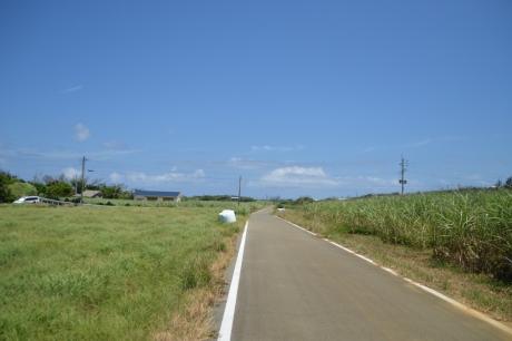 8緑を切り裂く道