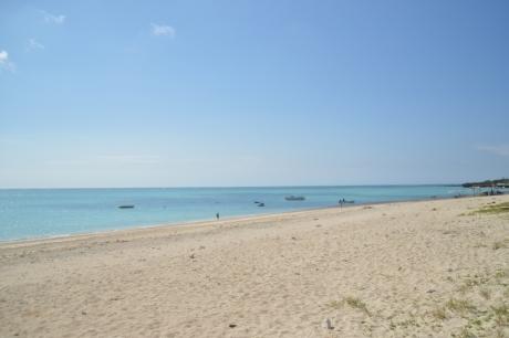 1朝の百合が浜