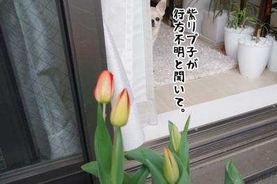 IMGP9659-2.jpg