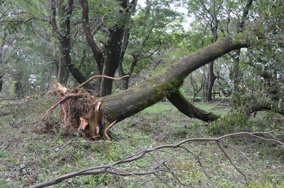 tree2_20150830_DSC_1370.jpg