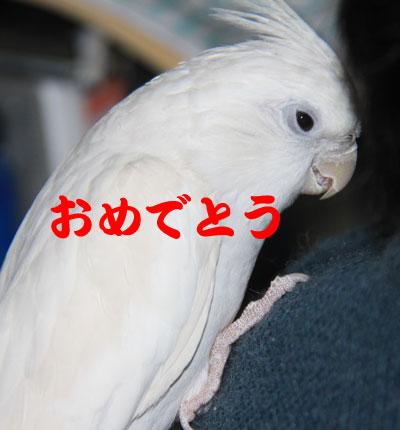 3_おめでとう