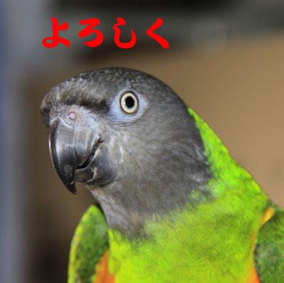 6_よろしく
