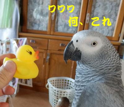 5_カンナ1