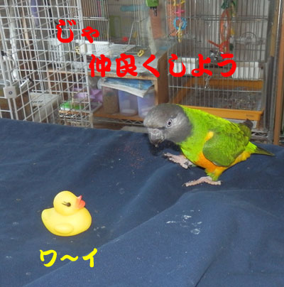 10_チャッピ2