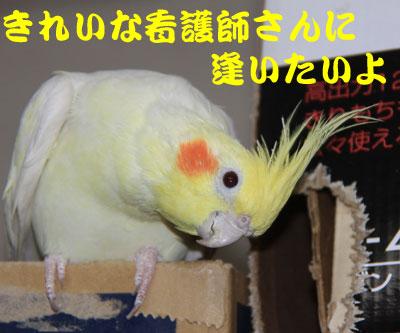 3_ノンちゃん