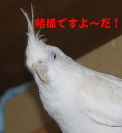 2_アンジュ2