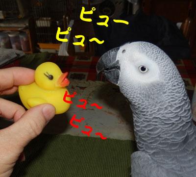 4_ピューピュー